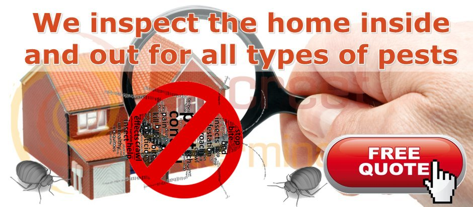 cheap bed bugs treatment. Bed Bug Treatment Hayes control and Elimination Hayes